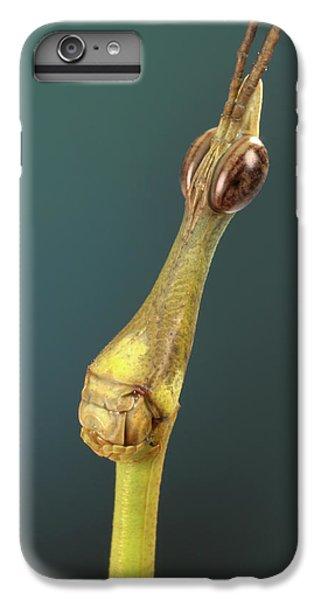 Grasshopper iPhone 6 Plus Case - Horsehead Grasshopper by Tomasz Litwin