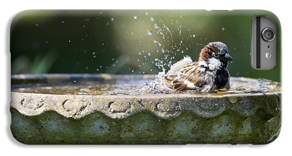 House Sparrow Washing IPhone 6 Plus Case by Tim Gainey