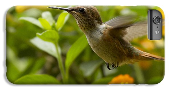 Hummingbird Looking For Food IPhone 6 Plus Case by Heiko Koehrer-Wagner