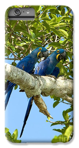 Hyacinth Macaws Brazil IPhone 6 Plus Case by Gregory G Dimijian MD