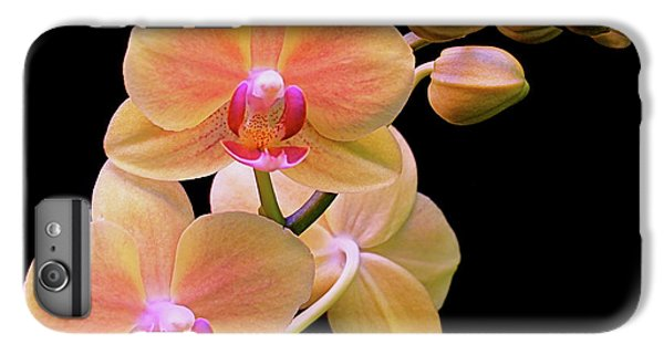 In Bloom IPhone 6 Plus Case by Rona Black