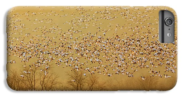 Goose iPhone 6 Plus Case - In The Magic Golden Would by David Hua