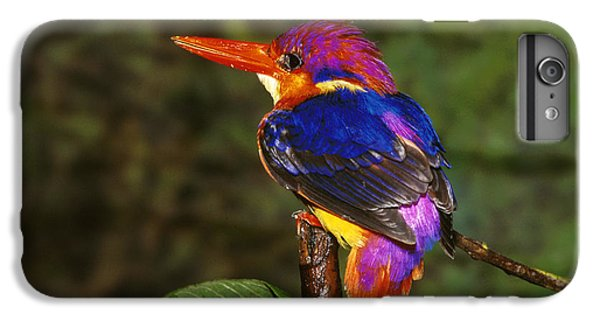 India Three Toed Kingfisher IPhone 6 Plus Case by Anonymous