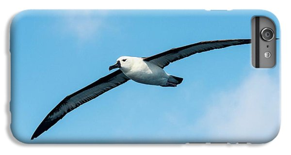 Indian Ocean Yellow-nosed Albatross IPhone 6 Plus Case by Peter Chadwick