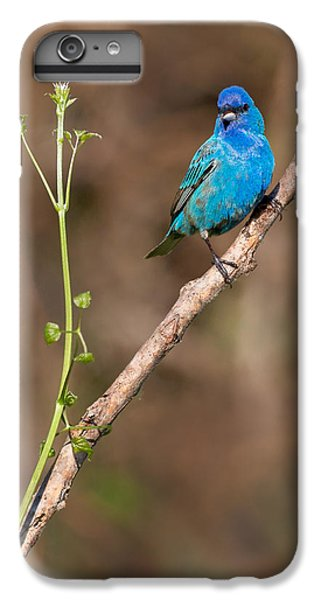Indigo Bunting Portrait IPhone 6 Plus Case by Bill Wakeley