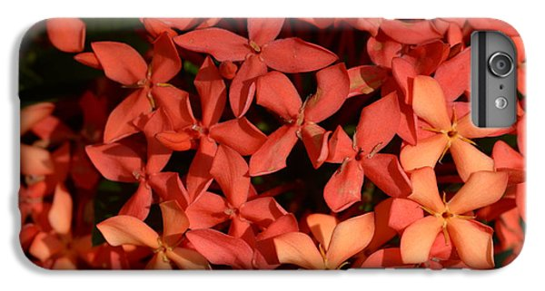 Decorative iPhone 6 Plus Case - Ixora Red by Sanjay Ghorpade