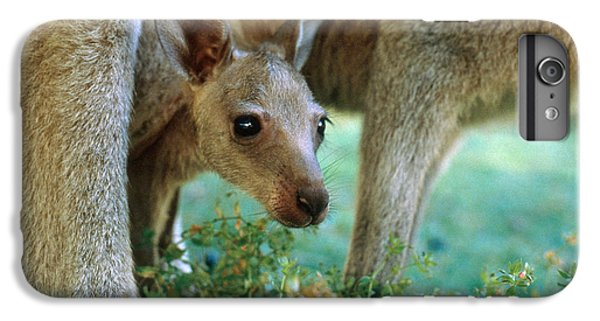 Kangaroo Joey IPhone 6 Plus Case by Mark Newman