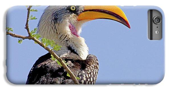 Kenya Profile Of Yellow-billed Hornbill IPhone 6 Plus Case
