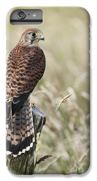 Kestrel IPhone 6 Plus Case by Tim Gainey