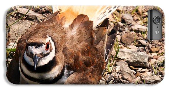 Killdeer On Its Nest IPhone 6 Plus Case by Chris Flees
