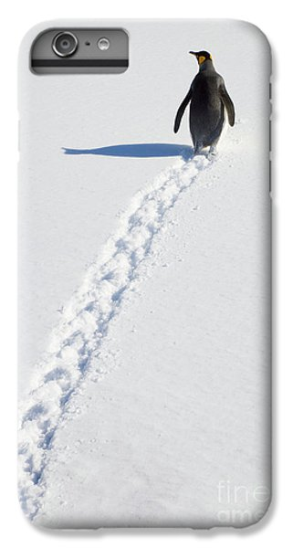 King Penguin And Tracks S Georgia Island IPhone 6 Plus Case by Yva Momatiuk and John Eastcott