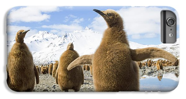 King Penguin Chicks South Georgia Island IPhone 6 Plus Case by Yva Momatiuk and John Eastcott