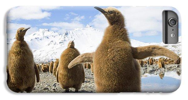 King Penguin Chicks South Georgia Island IPhone 6 Plus Case by Yva Momatiuk and John Eastcott