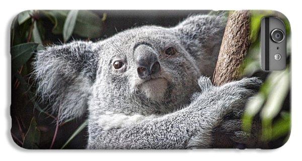 Koala Bear IPhone 6 Plus Case by Tom Mc Nemar