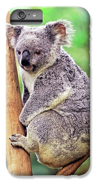 Koala In A Tree IPhone 6 Plus Case by Bildagentur-online/mcphoto-schulz