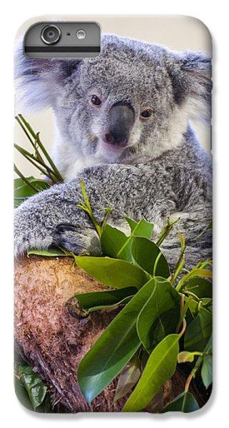 Koala On Top Of A Tree IPhone 6 Plus Case