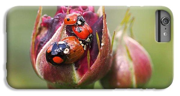 Ladybug Foursome IPhone 6 Plus Case