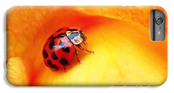 Ladybug IPhone 6 Plus Case by Rona Black