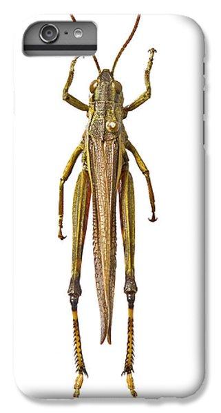 Grasshopper iPhone 6 Plus Case - Large Marsh Grasshopper by Natural History Museum, London