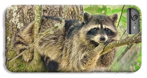 Lazy Day Raccoon IPhone 6 Plus Case
