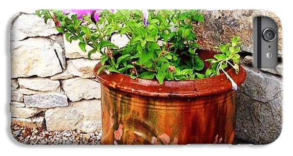 Decorative iPhone 6 Plus Case - Anduze Flower Pot With Petunias by Cristina Stefan