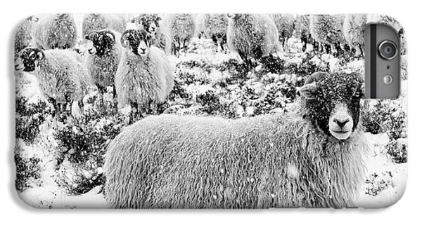 Sheep iPhone 6 Plus Case - Leader Of The Flock by Janet Burdon