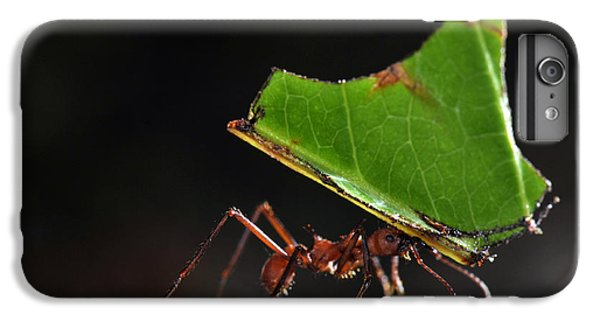 Leafcutter Ant IPhone 6 Plus Case by Francesco Tomasinelli