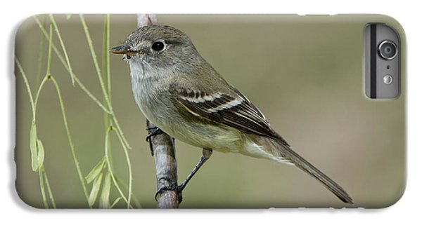 Least Flycatcher IPhone 6 Plus Case by Anthony Mercieca