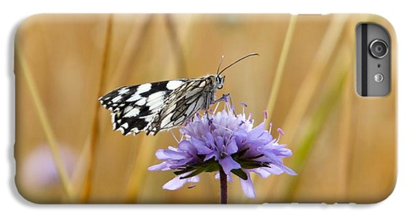 Light Butterfly IPhone 6 Plus Case
