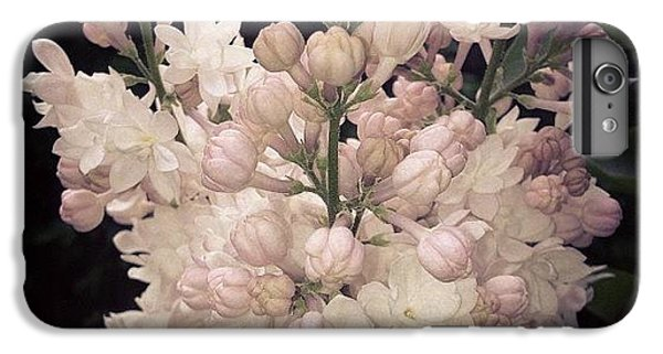 Lilacs Are Blooming IPhone 6 Plus Case