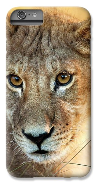 Lion Head iPhone 6 Plus Case - Lion Cub by Steve Allen/science Photo Library