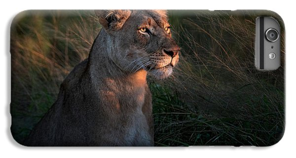 Lion iPhone 6 Plus Case - Lioness At Firt Day Ligth by Xavier Ortega