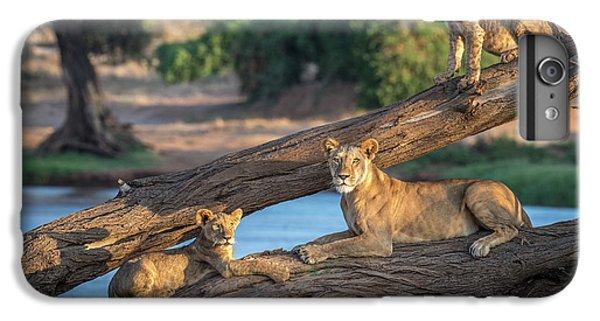 Lion iPhone 6 Plus Case - Lions Can't Climb Trees by Jeffrey C. Sink