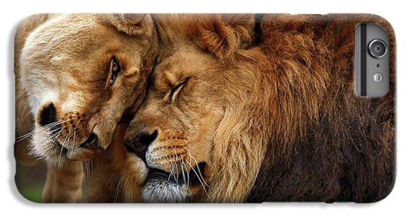Lion iPhone 6 Plus Case - Lions In Love by Emmanuel Panagiotakis