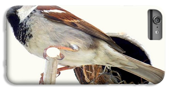 Little Sparrow IPhone 6 Plus Case by Karen Wiles