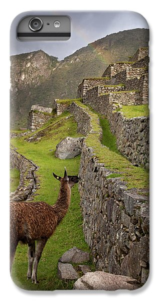 Llama Stands On Agricultural Terraces IPhone 6 Plus Case by Jaynes Gallery