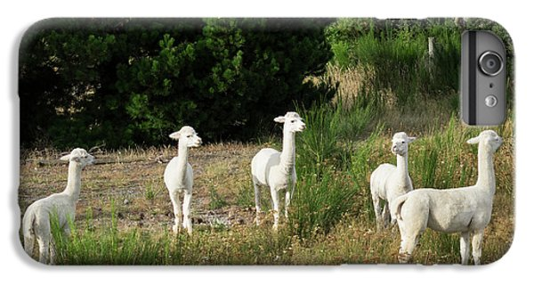 Llama iPhone 6 Plus Case - Llamas Standing In A Forest by Panoramic Images