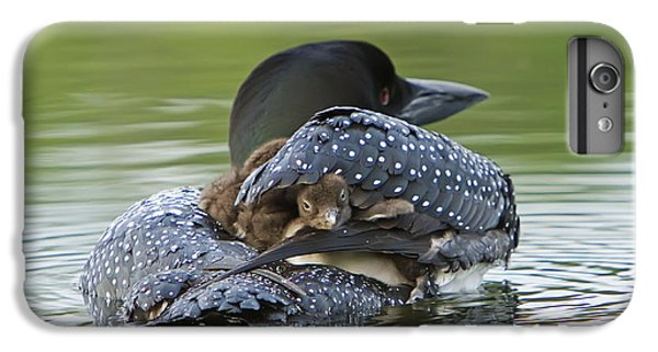 Loon iPhone 6 Plus Case - Loon Chick - Peek A Boo by John Vose