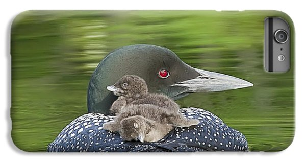 Loon iPhone 6 Plus Case - Loon Chicks -  Nap Time by John Vose