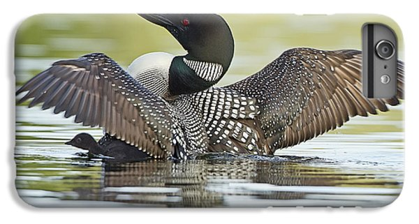 Loon iPhone 6 Plus Case - Loon Wing Spread With Chick by John Vose