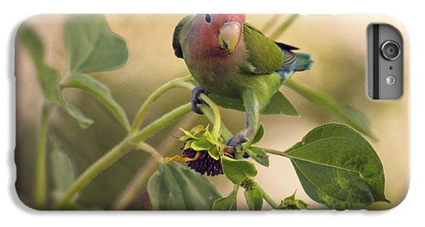 Lovebird On  Sunflower Branch  IPhone 6 Plus Case by Saija  Lehtonen