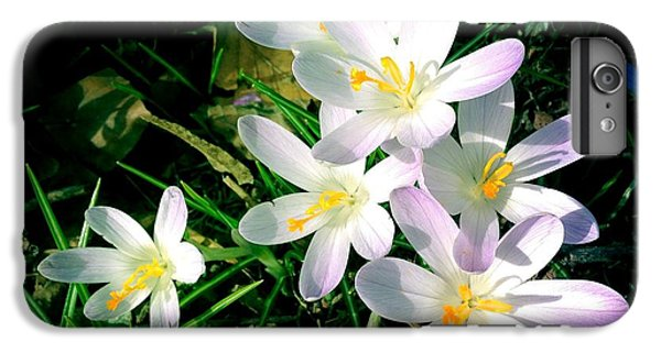 Bright iPhone 6 Plus Case - Lovely Flowers In Spring by Matthias Hauser