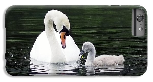 Lunchtime For Swan And Cygnet IPhone 6 Plus Case