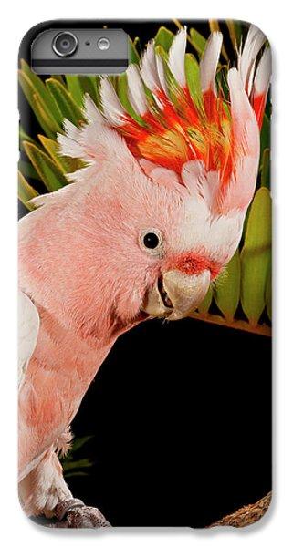 Cockatoo iPhone 6 Plus Case - Major Mitchell's Cockatoo, Lophochroa by David Northcott