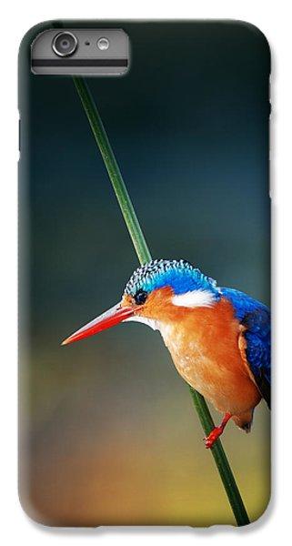 Kingfisher iPhone 6 Plus Case - Malachite Kingfisher by Johan Swanepoel