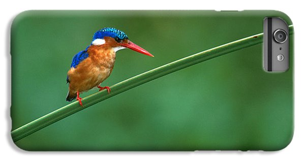 Malachite Kingfisher Tanzania Africa IPhone 6 Plus Case by Panoramic Images