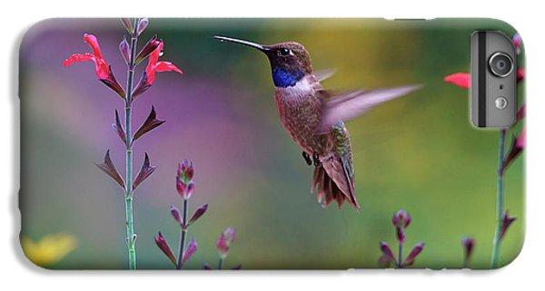 Male Black-chinned Hummingbird IPhone 6 Plus Case