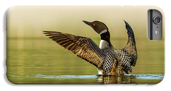Loon iPhone 6 Plus Case - Male Common Loon Drying His Wings by Chuck Haney