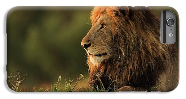 Lion iPhone 6 Plus Case - Male Lion Watching Sunrise In Masai Mara by Massimo Mei