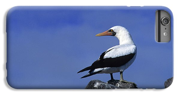 Masked Booby Bird IPhone 6 Plus Case by Thomas Wiewandt